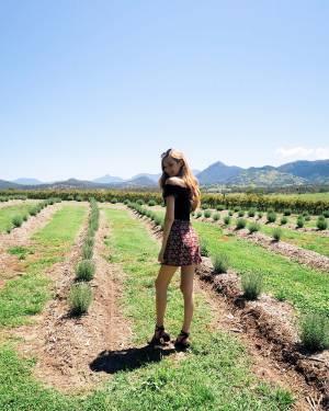 Lavender Farms, Vineyards + My Summer Bucket List