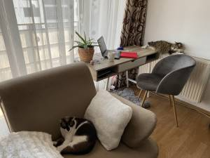 Working from Home: Tips and Tricks