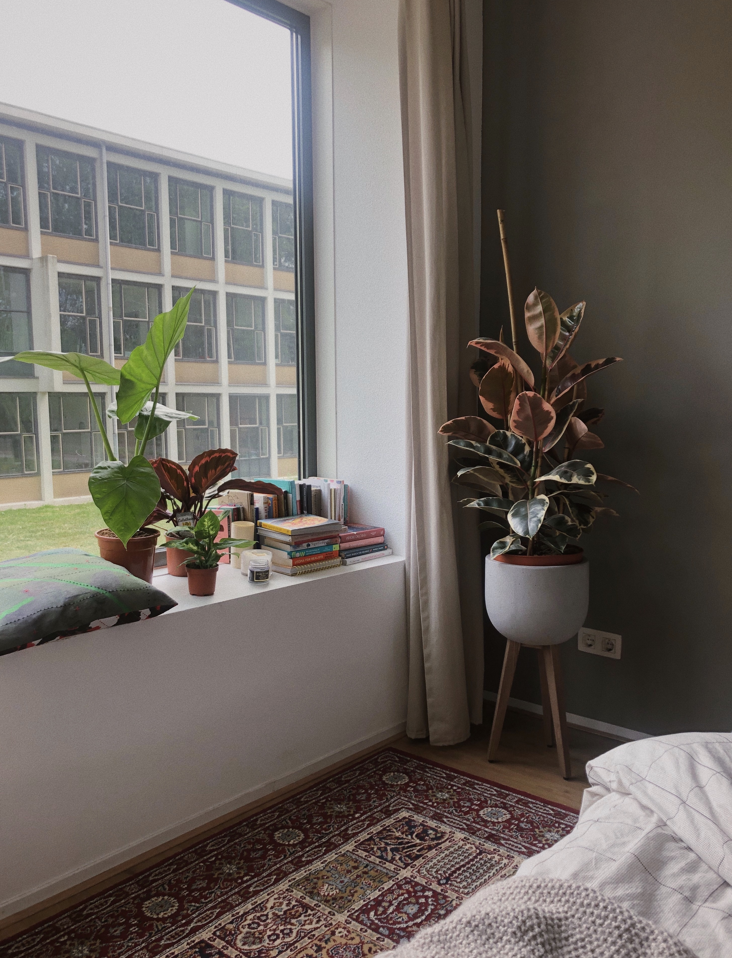 Cozying up Your Place with Plants & Other Tips