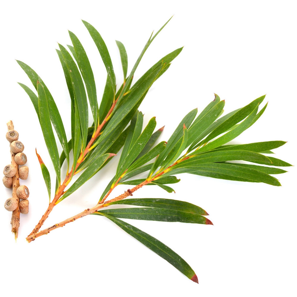 Tea Tree oil : For all things skin and hair