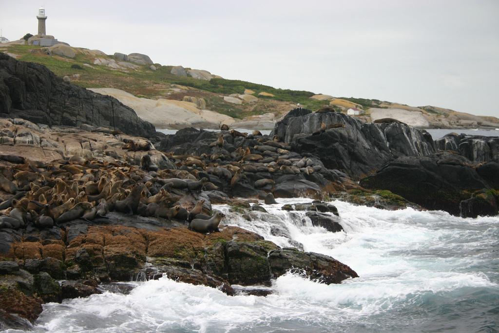 Montague Island